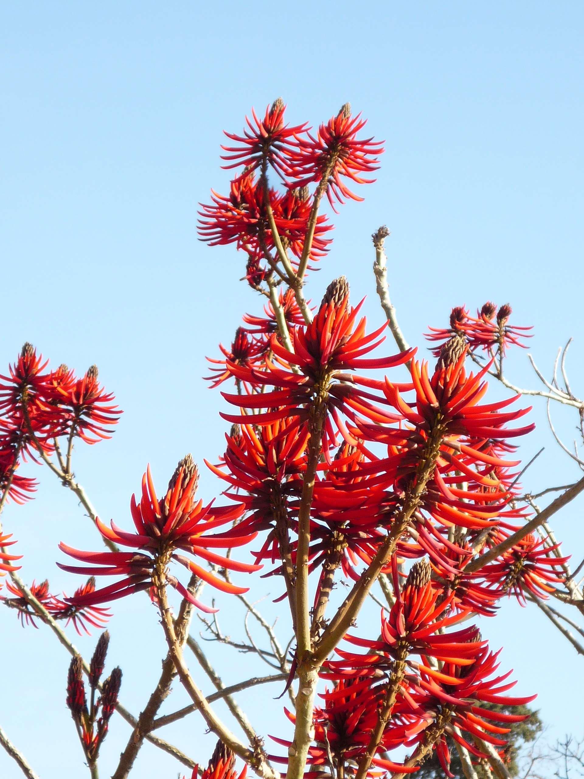 Tree-in-Tucuman