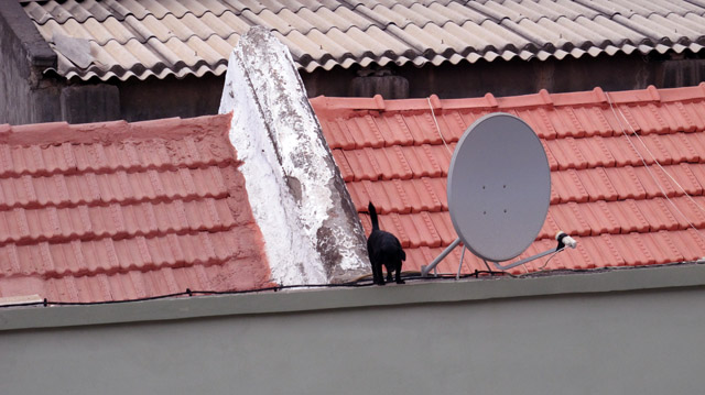 The_little_black_dog_that_lives_on_the_roof