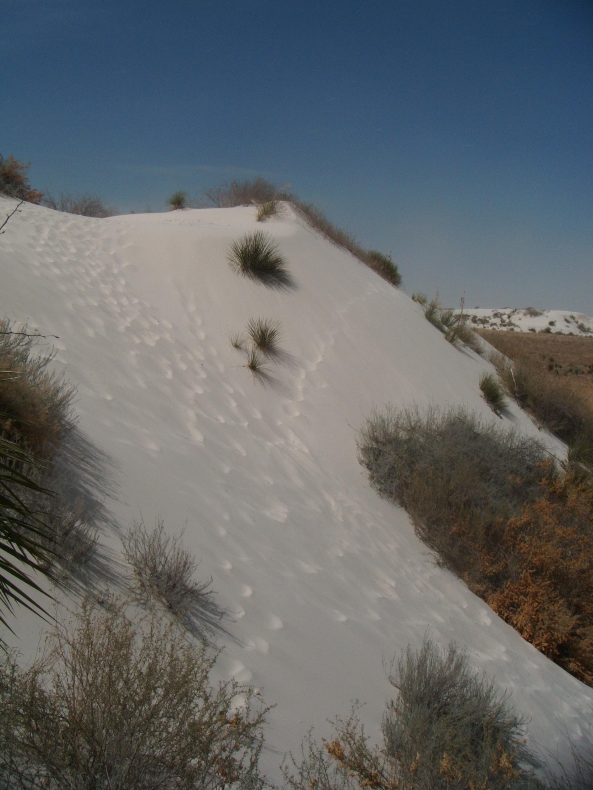 White-sands_dune
